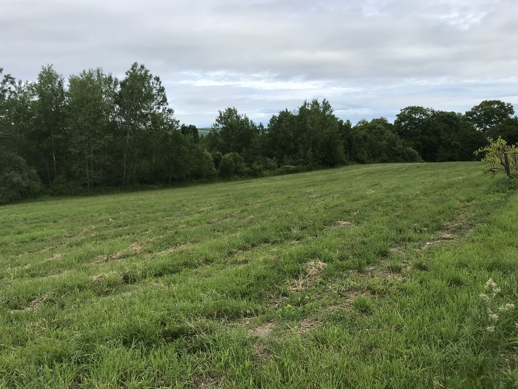 Lot 5, Mitchell, Marcy Goodwin Hill, Dundee, NY 14837 facing north